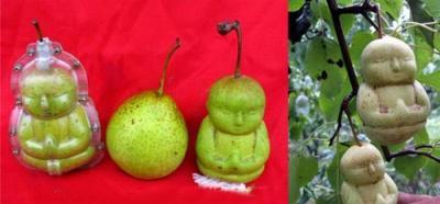 Frutos modificados